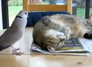 Um gato paciente e uma rola chata